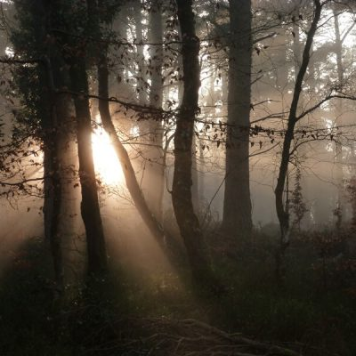 Woodland Dawn, Exmoor