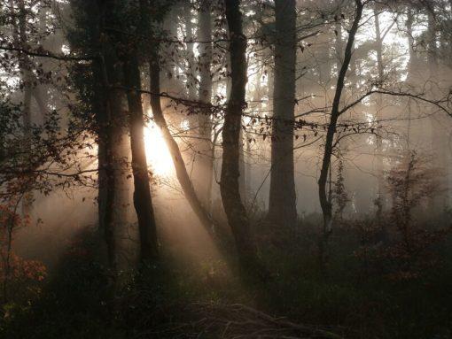 Woodland Dawn, Exmoor